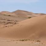 Dans les dunes de Khongorin Els